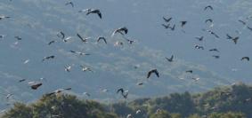 La campagna animalista si prefigge la chiusura della caccia sull'intero promontorio.