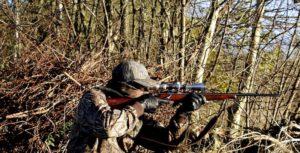 caccia richiamo vivo colombaccio